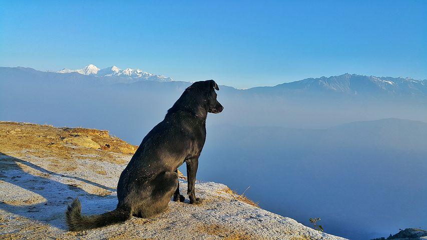 HomeCamper Voyagez avec un chien (2)