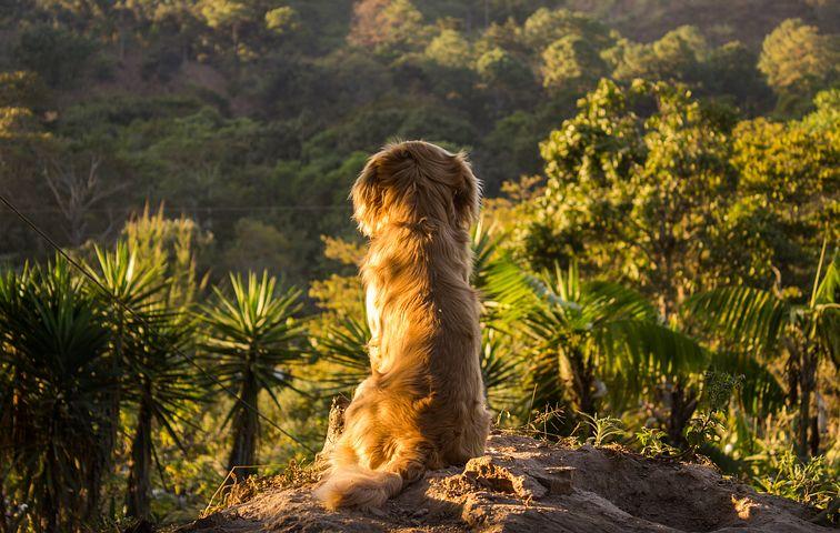 HomeCamper Voyagez avec un chien (4)