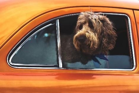 HomeCamper Voyagez avec un chien (6)